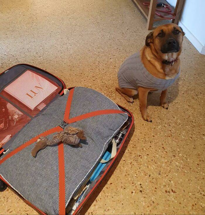 These Pets Will Never Forsake Their Favorite Toys!