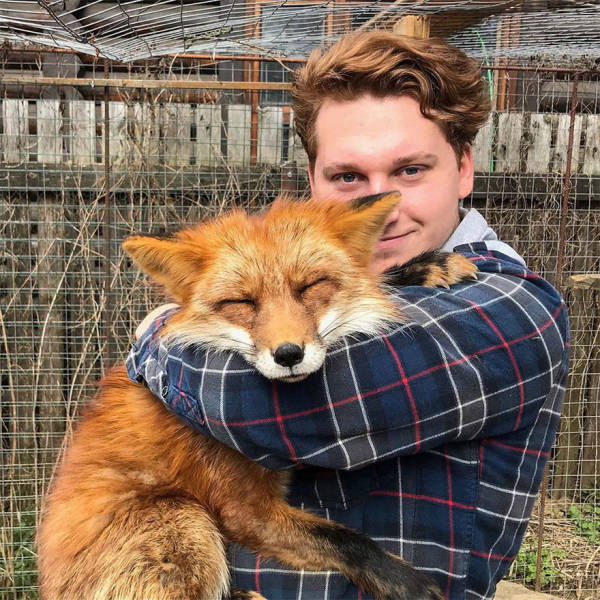 Guy Saves A Fox From A Fur Farm, They Become Best Friends