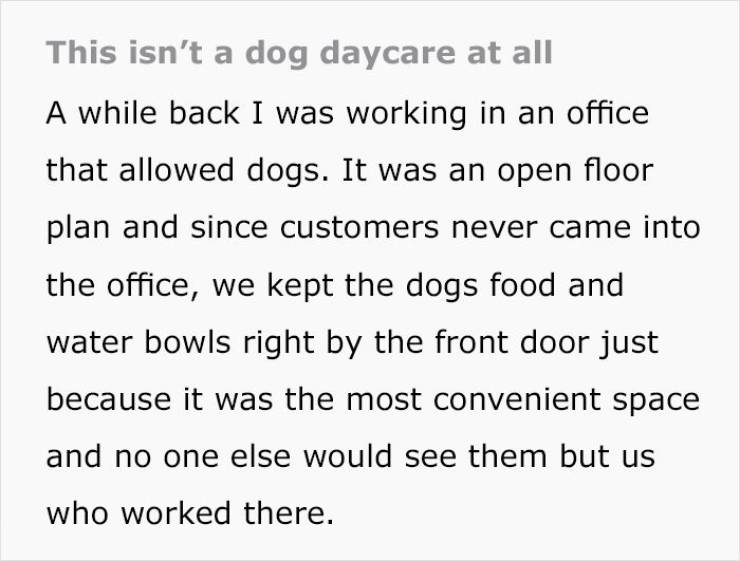 Ma'am, We Are Not A Dog Daycare!