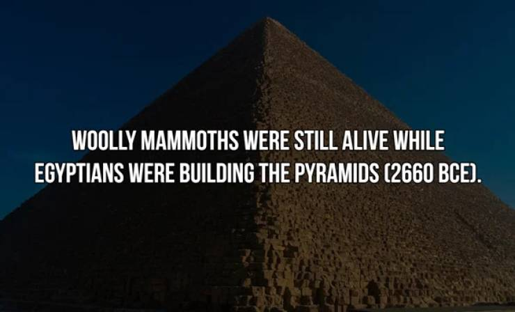 History Facts Are Just Too Interesting!