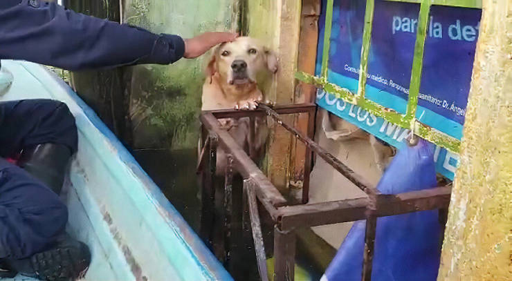 Golden Retriever Saved From Mexican Flood Gets Taken By The Marines Who Saved Him