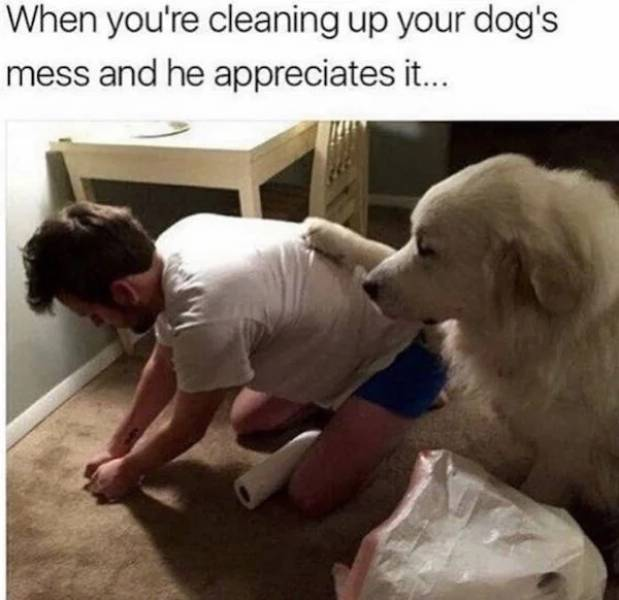 Dogs Approve These Memes!