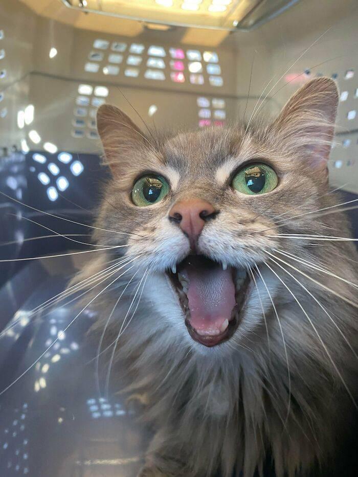 November's Best Rescued Pet Stories & Photos!