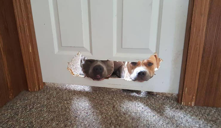 These Dogs Are Guilty!