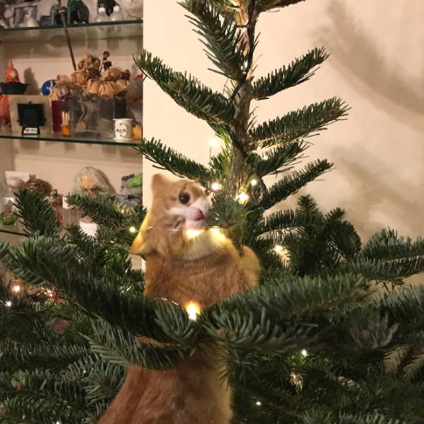 Cats Love Christmas Trees!