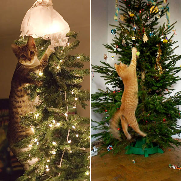 Cats Love Christmas Trees!