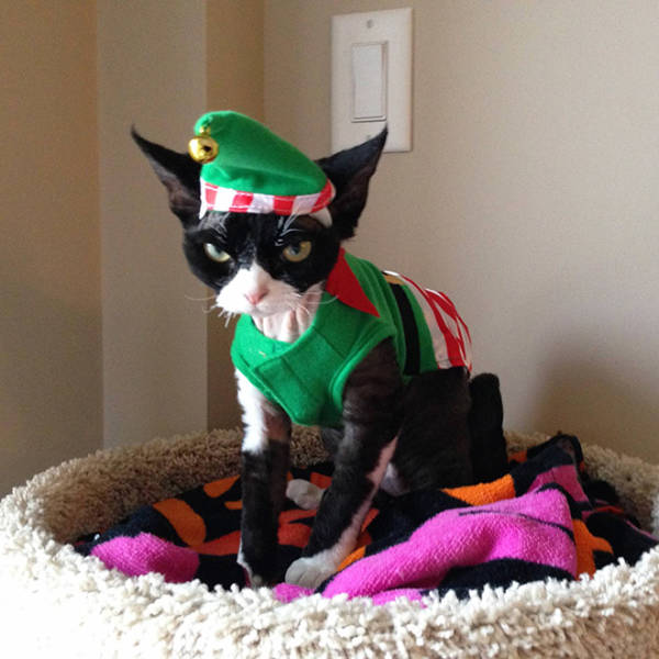 These Pets Are Not Ready For Christmas…
