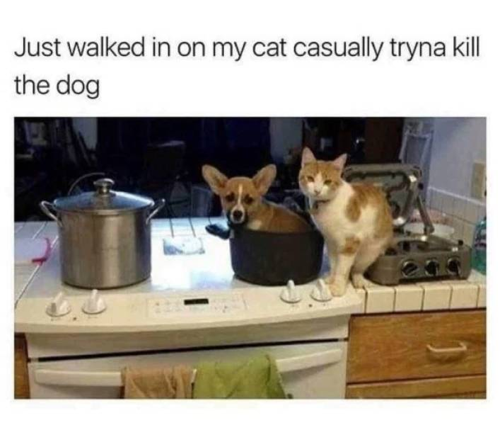 Animal Lovers Will Like These Memes!