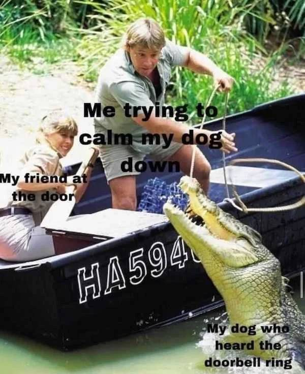 These Dog Memes Could Lick You Or They Could Bite You