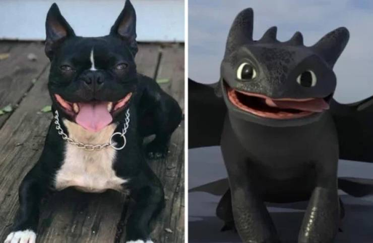 These Dogs Look Like Something Else…