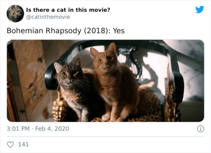Do You Know If There Is A Cat In This Movie?