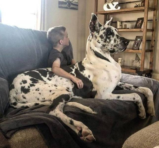 These Pets Are Real Big!
