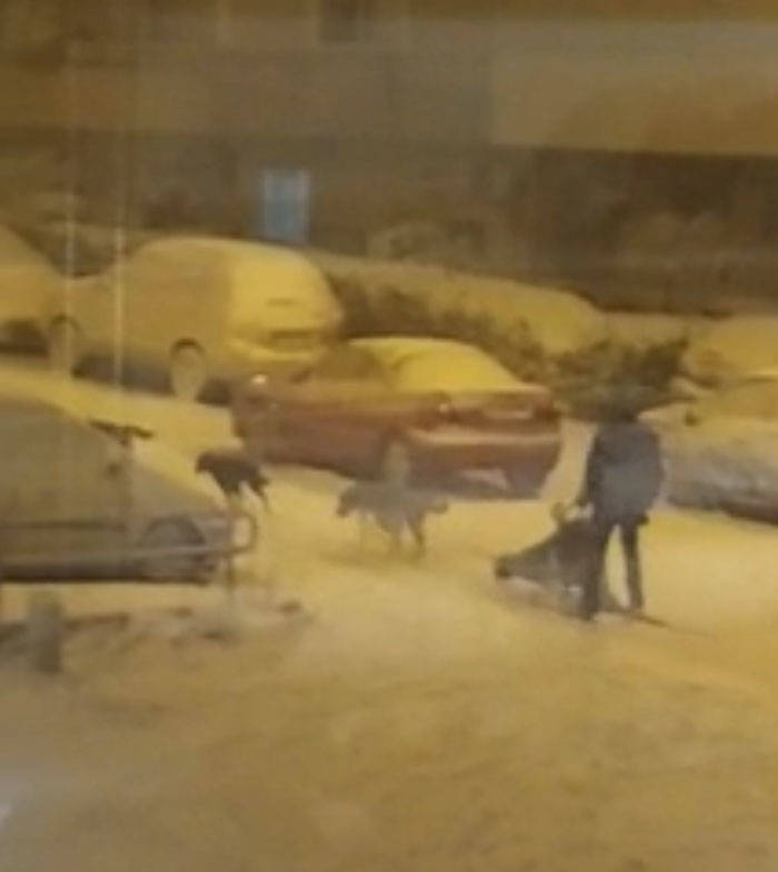 Spain Experiences Their Biggest Snowfall In Nearly 50 Years!