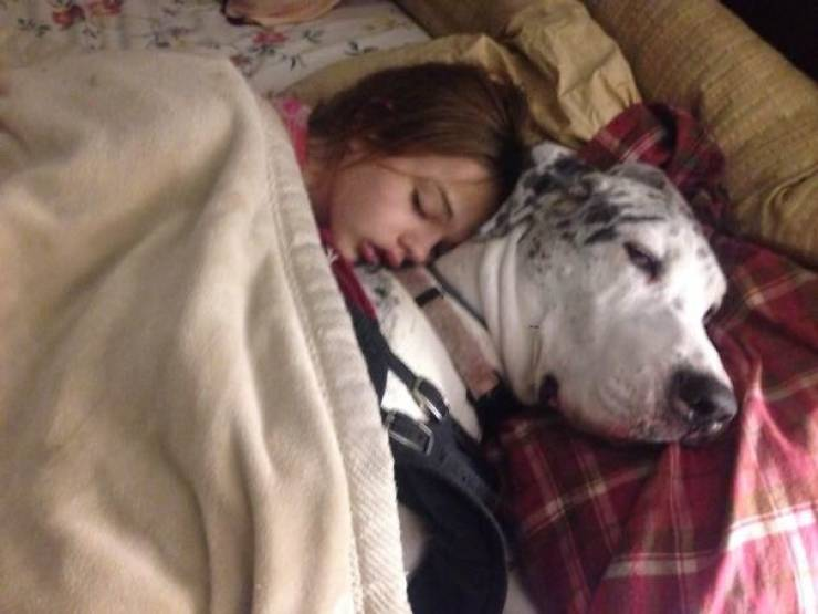 These Great Danes Have No Idea How Giant They Are…