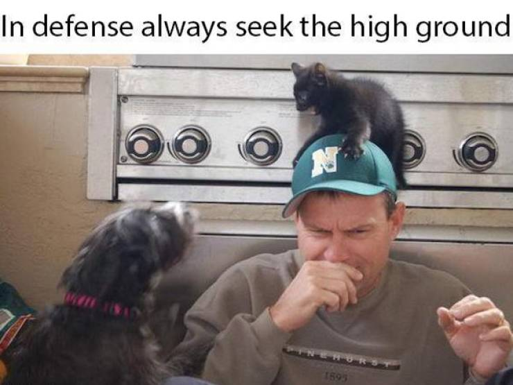 Pet Owners Will Love These Memes!