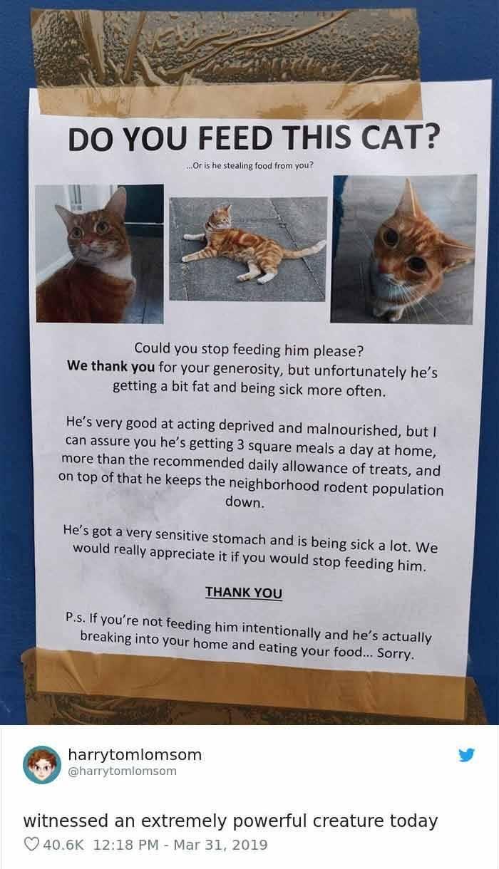 Beware Of These Mischievous Cats!