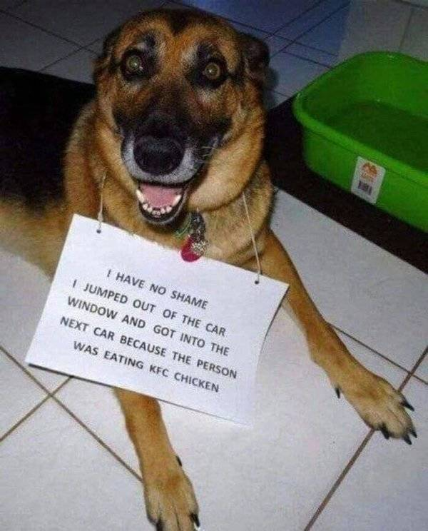 Dogs Can Have Some Weird Habits…