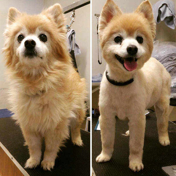 Dogs Who Got Completely Transformed By Their Groomers