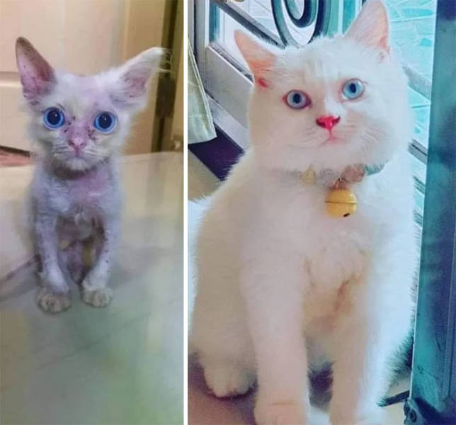How Tiny Kittens Turn Into Majestic Grown-Up Cats