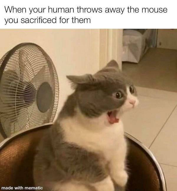 These Cat Memes Don't Care About Anyone Except Themselves…