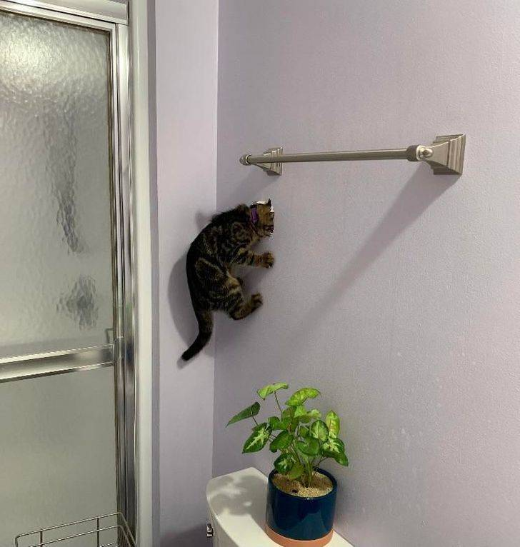 Cats Couldn't Care Less About The Laws Of Physics…