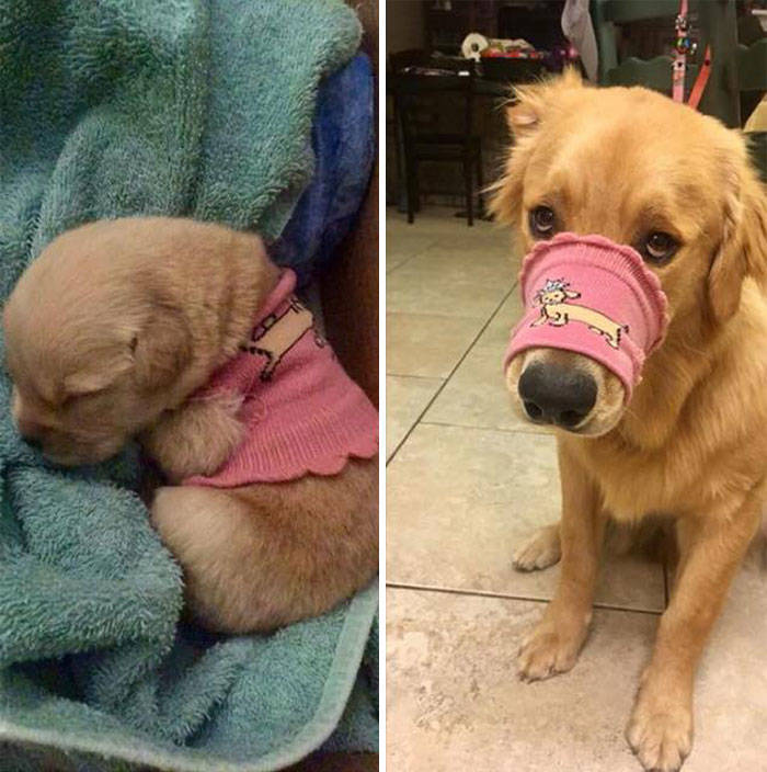Dogs Before And After Growing Up