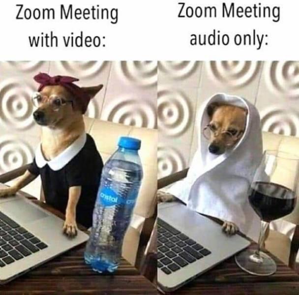 Don't Bark At These Dog Memes!