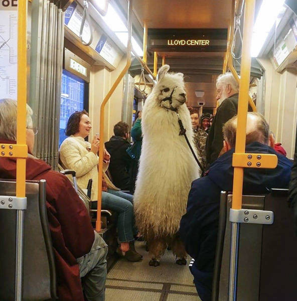 Traveling Animals Who Are Much More Civilized Than Many Humans…