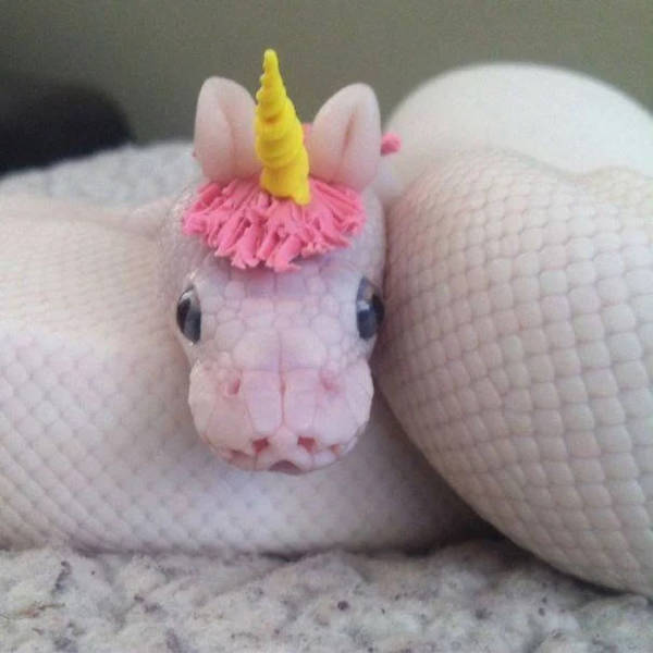 Turns Out, Snakes Wear Hats…