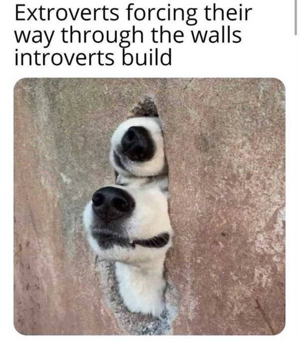 Don't Share These Introvert Memes With Anyone