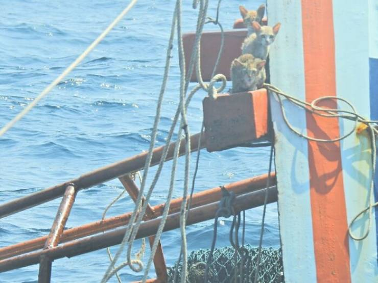 Thai Navy Officer Saves Cats From A Rapidly Sinking Ship