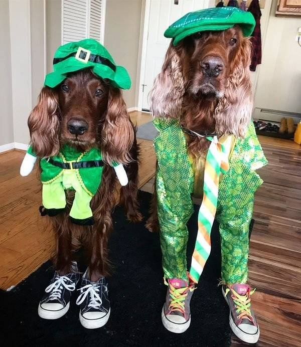 Just Irish Things…
