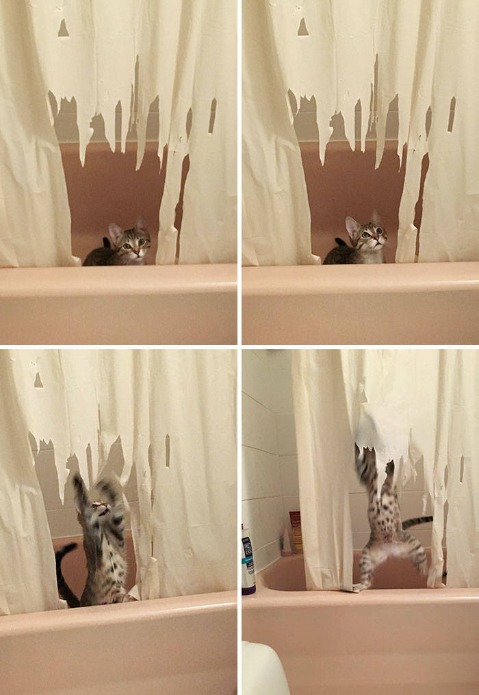 These Pets Have No Regrets…