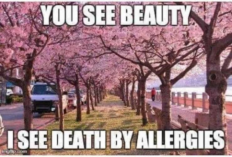 These Memes Are Just As Bad As Your Allergies!
