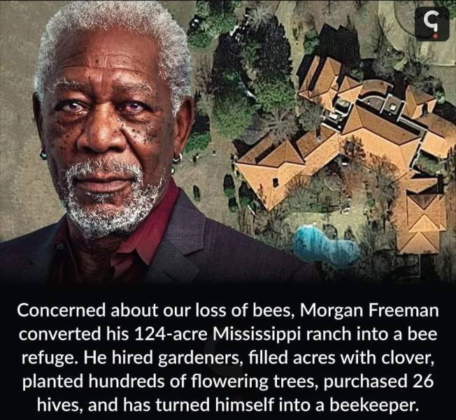 Morgan Freeman converted his 124-acre Mississipi ranch into a bee refuge.