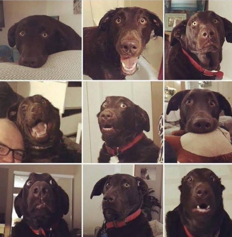 A funny dog with hilarious facial expressions.