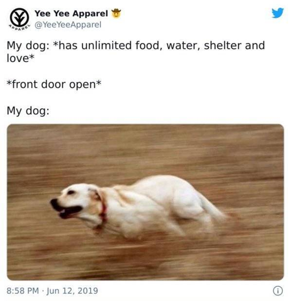 Dog Owners Know These Memes By Heart…