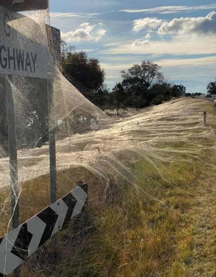 """Spiderocalypse"" In Australia"