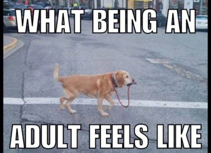 Adulting Memes Are Starting To Ache… A Lot!