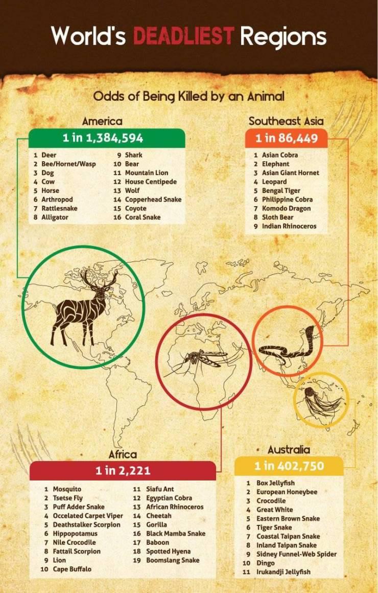 The Deadliest Animals Around The World