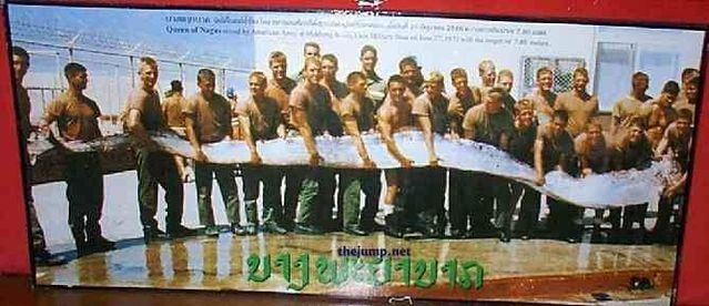 Oarfish – a very lengthy fish (25 pics + 2 videos)