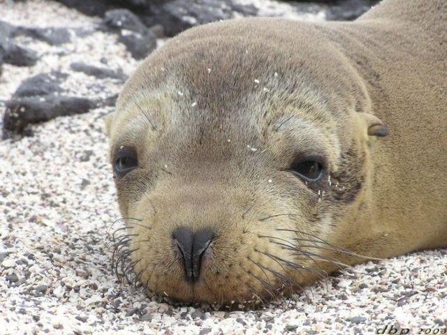 Marine mammals pictures - photo#43