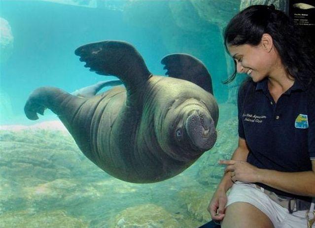 Cute marine mammals (66 pics)