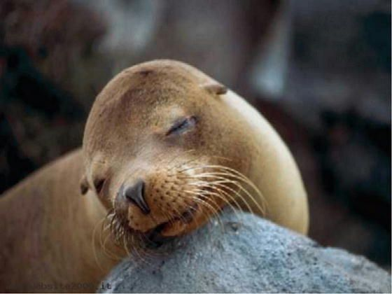 Marine mammals pictures - photo#41