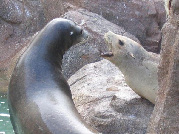 Marine mammals pictures - photo#44