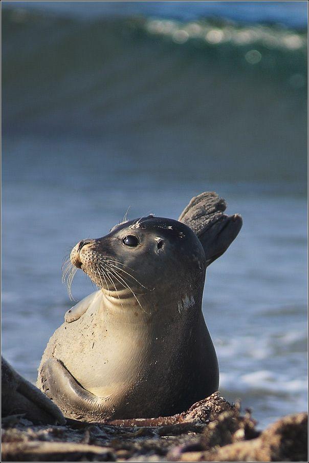 Marine mammals pictures - photo#32