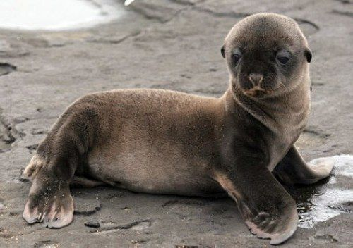 Cute marine pictures