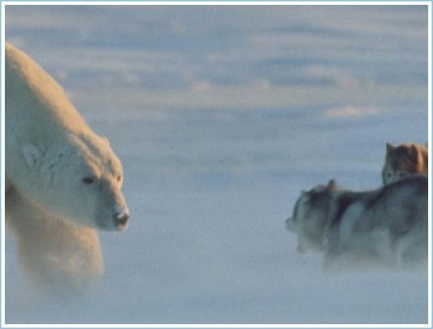 An incredible encounter! (6 pics)