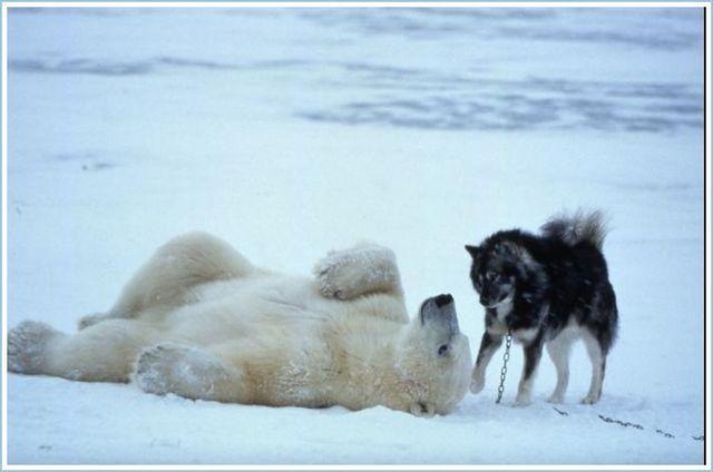 Keakraban si BERUANG dan DOGGY
