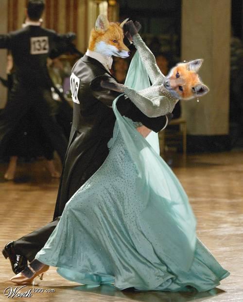 Dancing animals! (36 pics)